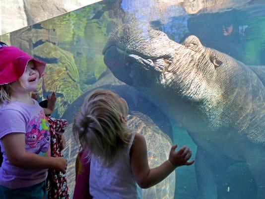 July 21, 2016: Cincinnati Zoo and Botanical Garden, Hippos, Liz Dufour