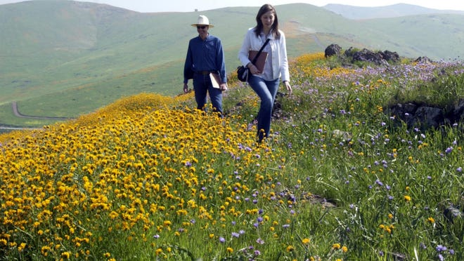 Botanist Fletcher Linton of Springville, left, and Sequoia Riverlands Trust's Erica Tootle of Visalia visit the Lewis Hill Preserve above Porterville.