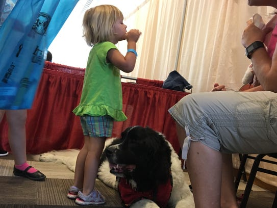 Z, a 4-year-old Landseer Newfoundland, making new friends