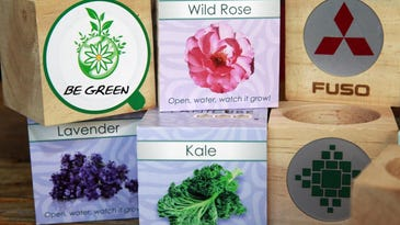 """The """"plant cubes"""" are just big enough to be adorned with a company's name, website address and telephone number."""