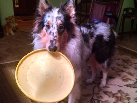 636632690419708880-NEW-Annie-and-Frisbee.jpg