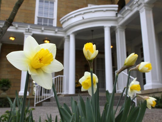 Granville Garden Club — Granville Daffodil Show at Bryn Du Mansion