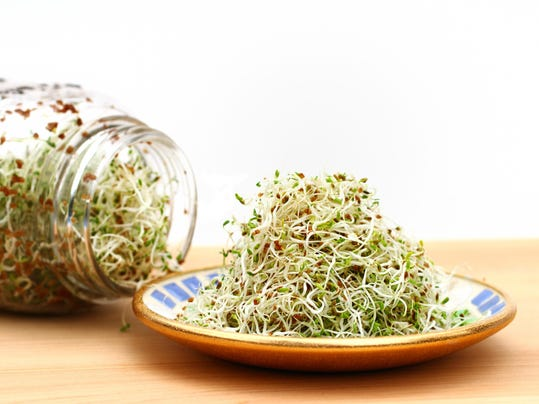 Alfalfa sprouts on plate and in jar