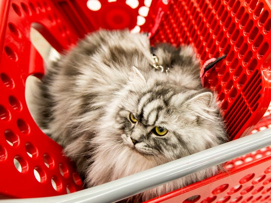 Target Uses Cat in Ads