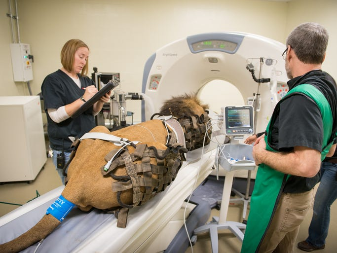 The Columbus Zoo recently performed a CT scan on a