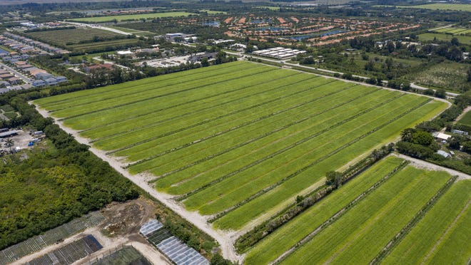Reserve at Atlantic, 40 acres on the southeast corner of Atlantic Avenue and Half Mile Road. The builder, Bove Development of Ponte Vedra Beach, is seeking another new category - workforce housing residential. It would result in 480 homes on 35 acres. The property owner also could place industrial businesses on the remaining 4.5 acres in the Ag Reserve in western Palm Beach County, Florida on June 10, 2020.