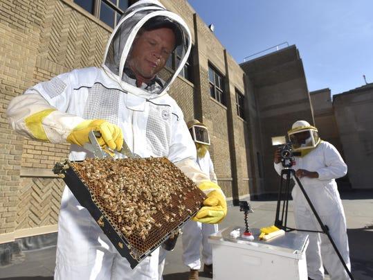 042618-tm-Bees102