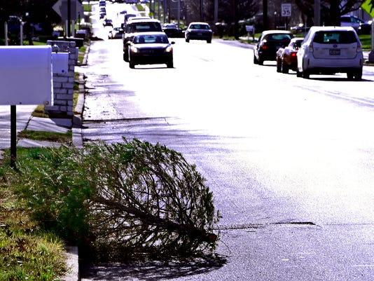 CPO-MWD-010416-tree-collection