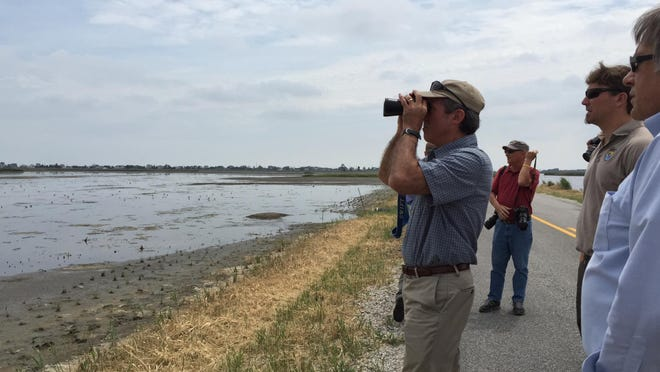 Rep. John Carney looks at a bald eagle nest off Prime Hook Beach Road. He visited the area as part of a statewide, multiday tour to discuss climate change impacts.