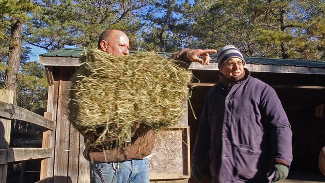"Zookeeper Mike Pisano explains to reporter Jerry Carino where to put of the hay for the donkeys at Popcorn Park Zoo. Carino shadowed Pisano as part of a new series, ""Jerry's Jobs."""