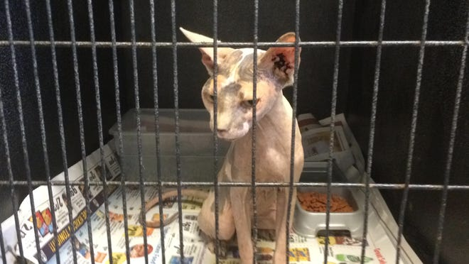 Hairless Cats And Dogs Seized From Former Breeder