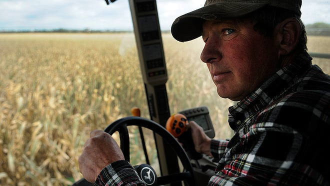 Steve Beck, a Clear Lake-area farmer, drives a combine on his farm at noon Monday. Beck's father died 11 years ago in the kind of grain bin accident that can happen in a busy harvest season.
