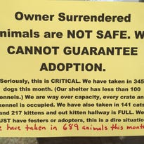 Increase in animals at Williamson County shelter