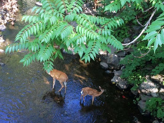 081816-vr-deer2.jpg