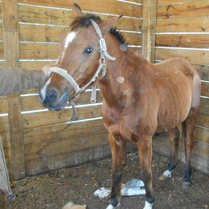 Since the seizure, the three remaining horses have
