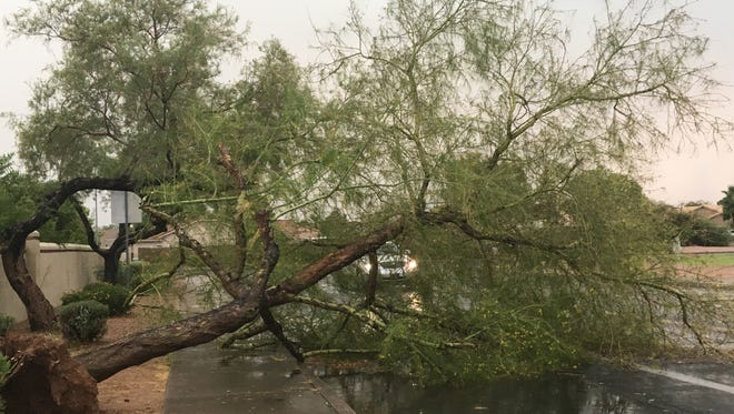 Tree falls in Mesa during severe thunderstorm on July 9, 2018.