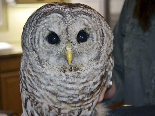 Lucky Owl