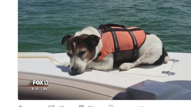 A Jack Russell terrier donning a life vest was saved by boaters earlier this week after floating in the sea for several hours.