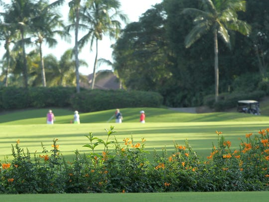 Golfers and lush landscape at Grey Oaks Country Club in Naples Thursday, December 17.