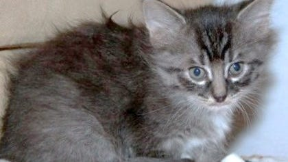 Tammy, one of a litter of five, is friendly and playful.