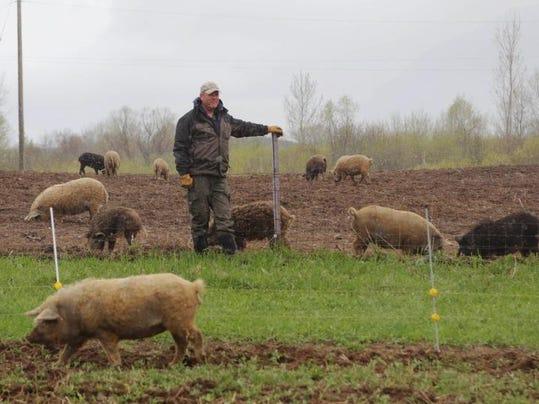 DFP exotic hogs (3).JPG