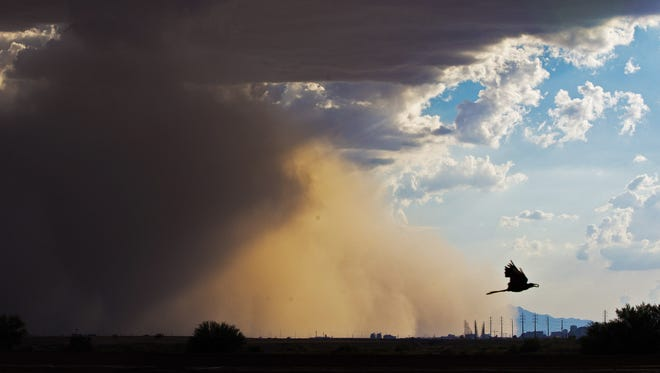 A dust storm blows into the metro Phoenix area as a bird flies away from it August 21, 2016.