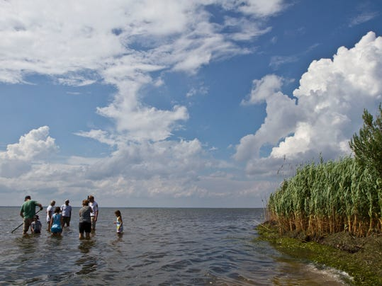 Reports ominous signs for troubled barnegat bay for Island beach state park fishing report