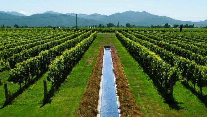 The Marlborough vineyards of  Villa Maria.