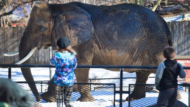 An African elephant strikes the pose Dec. 26, 2016, at the Milwaukee County Zoo
