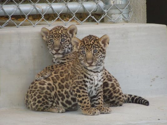 TDS cubs named 1021