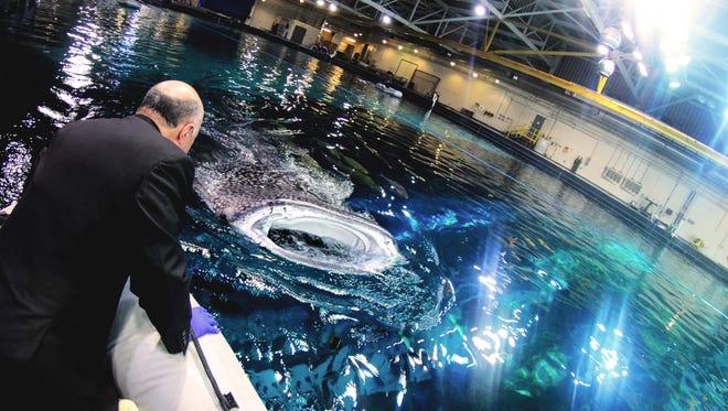 """Shark Tank Meets Shark Week"": Mr. Wonderful (Kevin O'Leary) meets Mr. whale shark at the Georgia Aquarium."