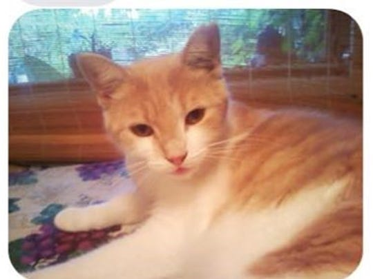 Jesse is missing from Bayshore Drive and Lunar Street.