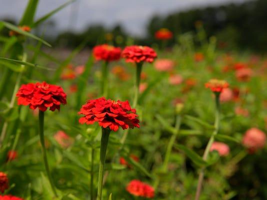 ASB 0817 Organic FarmingPresto ID: 87242932