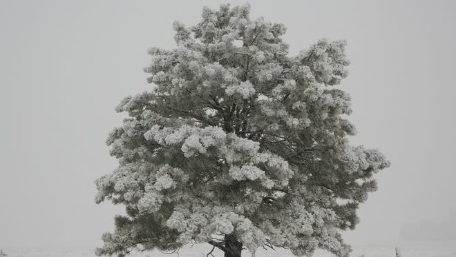 Snow falls over a desolate tree standing in Mormon Lake in Flagstaff on Jan 1. 2017.