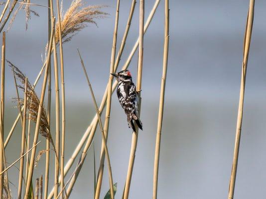 1-birding-IMG-3604.jpg