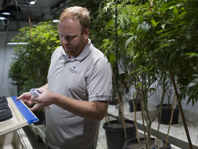 Matt Lascala, the head of cultivation for Huxton, gives