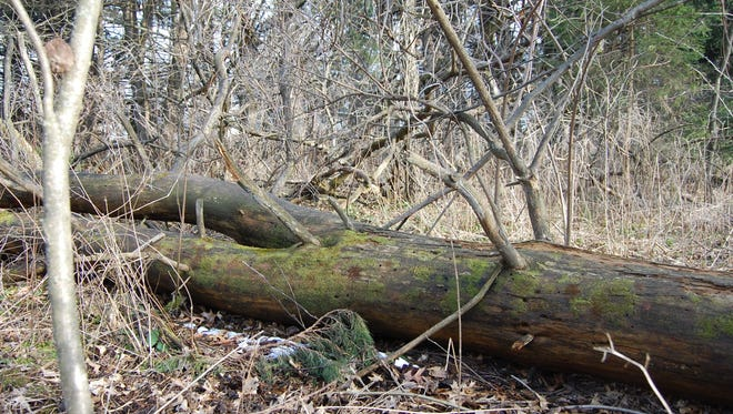 Fallen trees are utterly fascinating -- the bigger, the better.