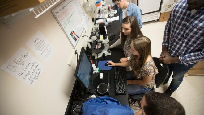 Florida Gulf Coast University biology students document breast cancer cells on campus on Thursday. The students are working with their professor, Lindsay Rhodes on cancer research in hopes of curing or slowing down the disease.