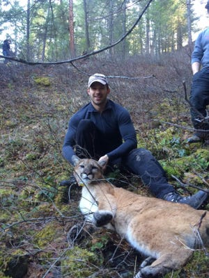 Patrick Stent, a wildlife biologist with the Fish and Wildlife Branch of the Ministry of Forests, Lands and Natural Resource Operations in British Columbia with a sedated mountain lion that was fitted with a GPS collar near Cranbrook in British Columbia so its movements could be monitored. The cat is now in Montana, east of Helena.