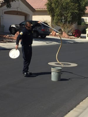 A Riverside County Department of Animal Services officer with a snake he removed from a Palm Desert home on Sunday.