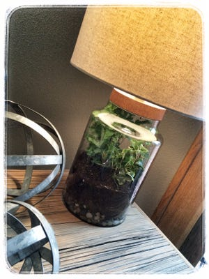 The Copper Pony provides ready-made terrariums to add a touch of spring to any room. Co-owner Josh Hoffman also provides do-it-yourself tips.