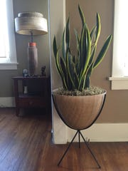 Homes Indoor Plant Design (2)