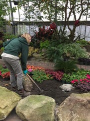 Krohn Conservatory staff member Allison Wallis works on setting up the 2017 Butterfly Show.