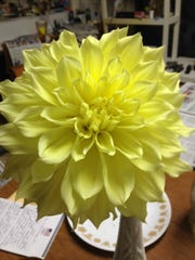 Dahlias are just beginning to bloom in John and Kathy's