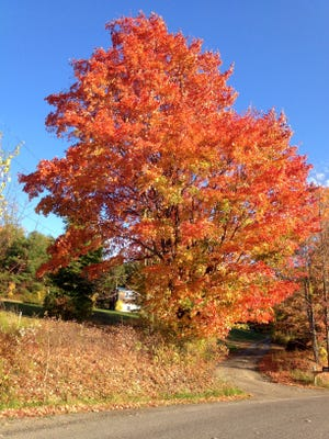 The colors are vibrant along Cowell Hill Road, just outside the village of Wellsburg.