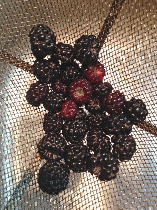 STC 0803 Blackberries.jpg