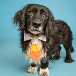Pets of the week: Valley adoptable animals