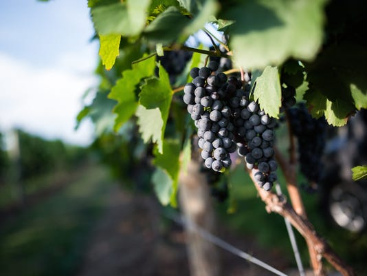 Gardener State: Toasting NJ vineyards and wines PHOTO CAPTION