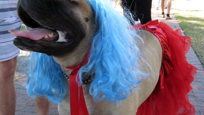 Daisy, owned by Kyler Whittenberger, looks like she's feeling very pretty in her costume Saturday while hanging out with all the other dogs during Barktoberfest in Seville Square.