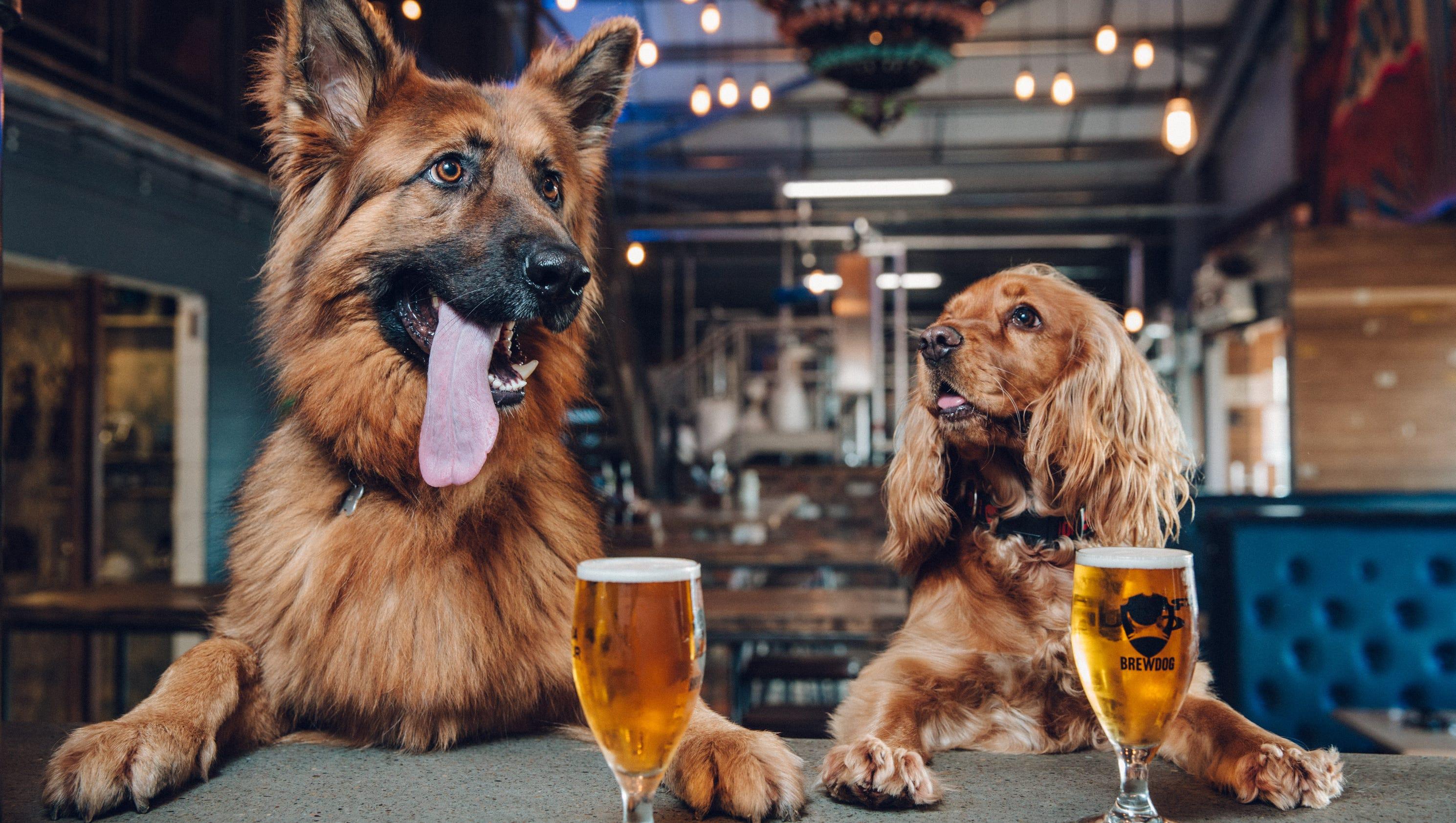 Dog Friendly Walking Holidays Scotland